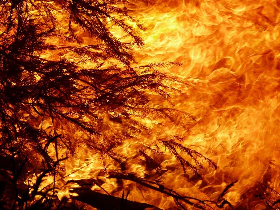 Australia se está quemando