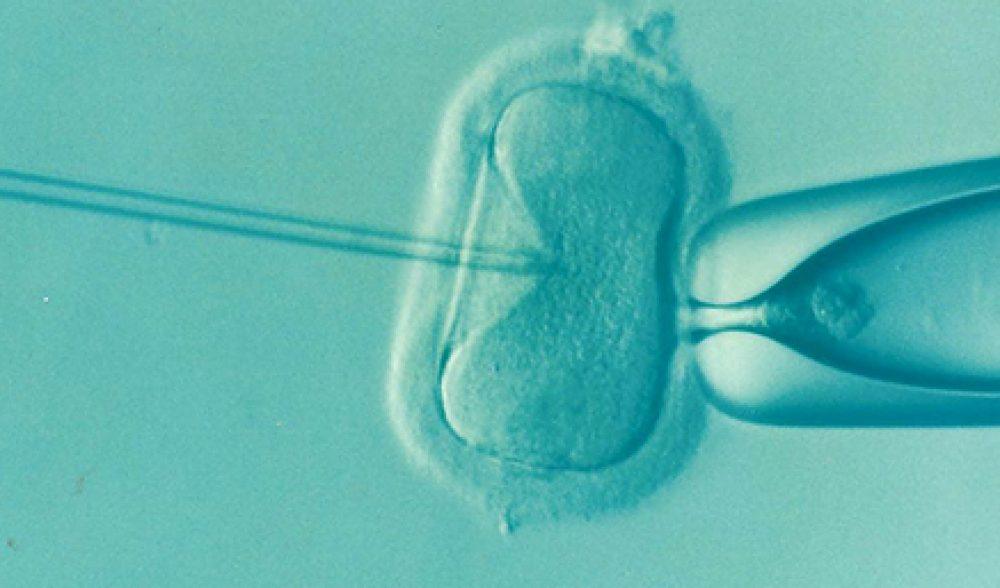 El negocio de la fertilidad